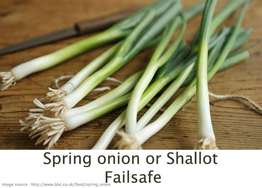 FAQspringonion